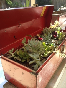 This tool box is a great size for a succulent garden.